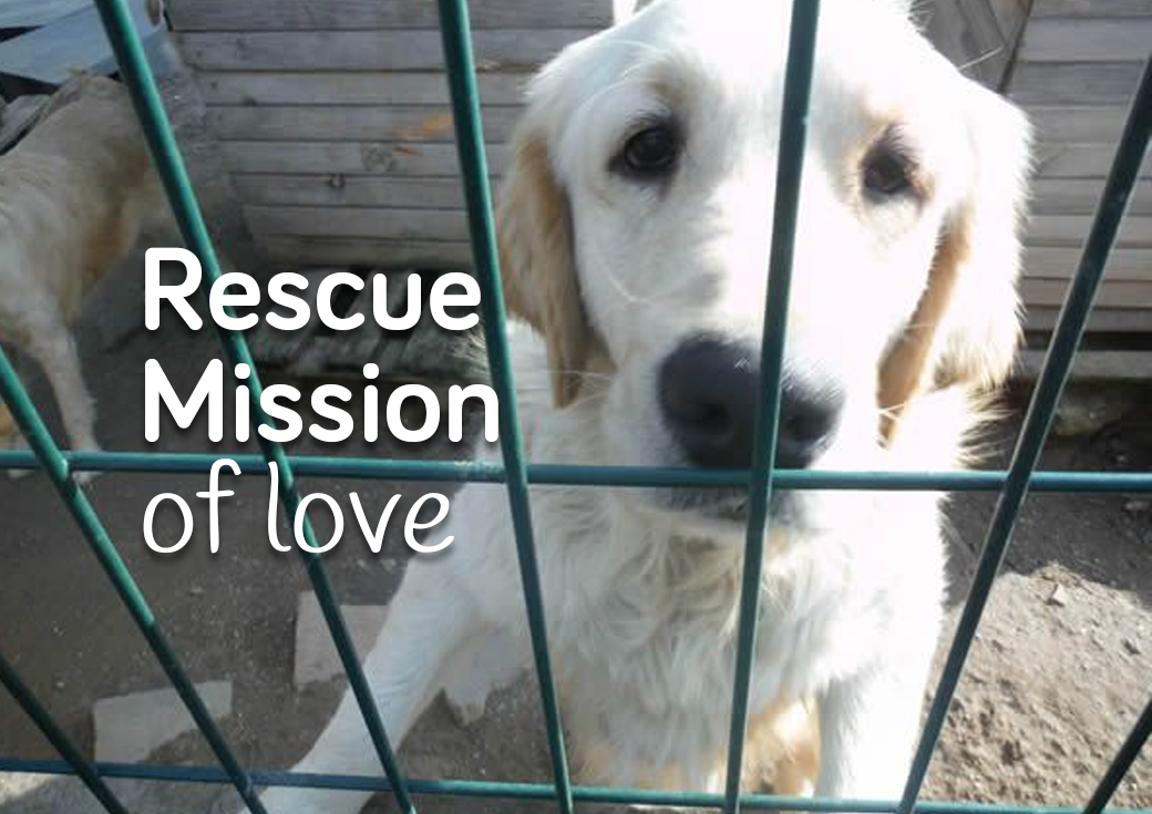 Instabul - Rescue Mission of Love