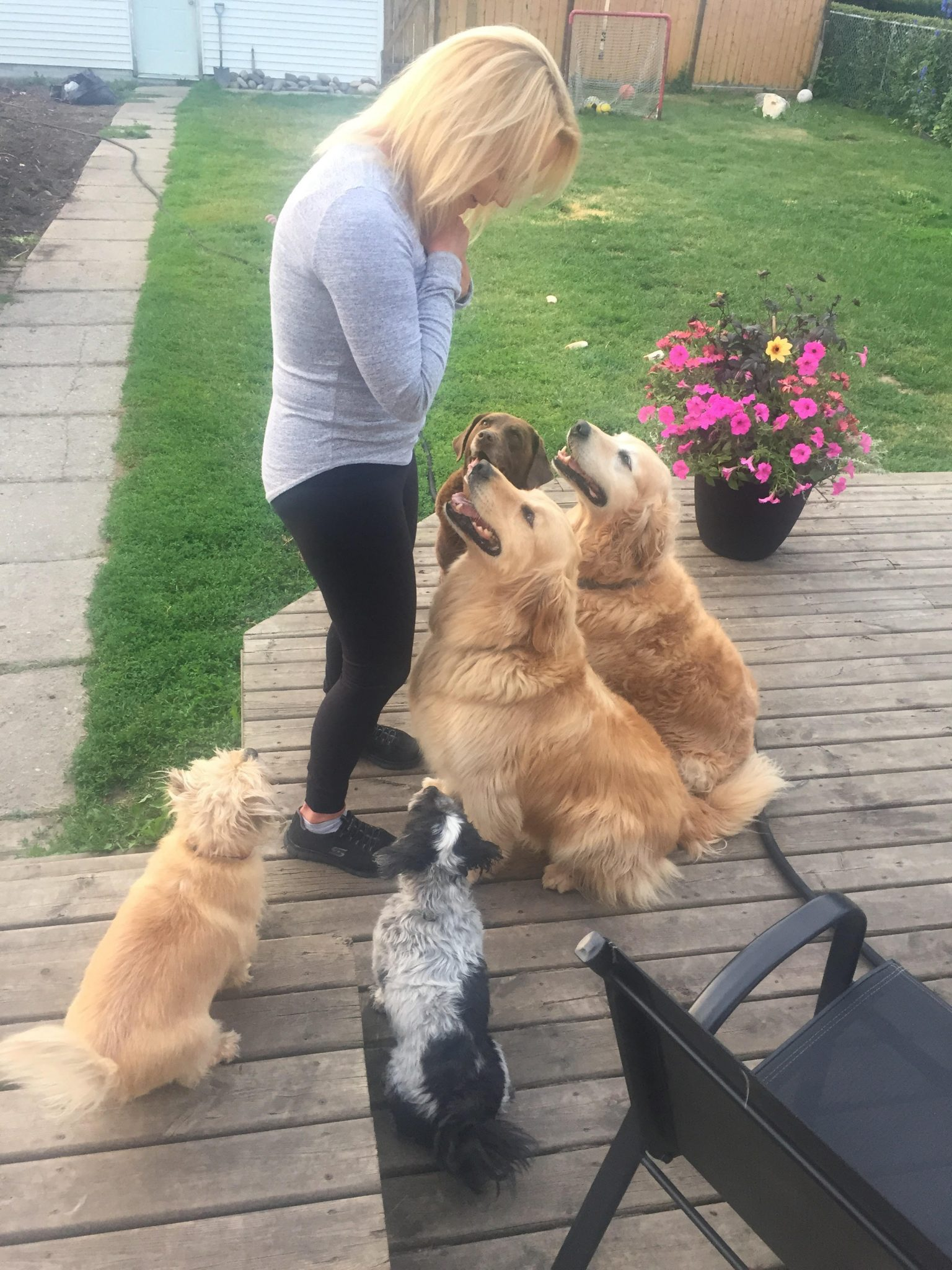 Bev Milobar with her goldens