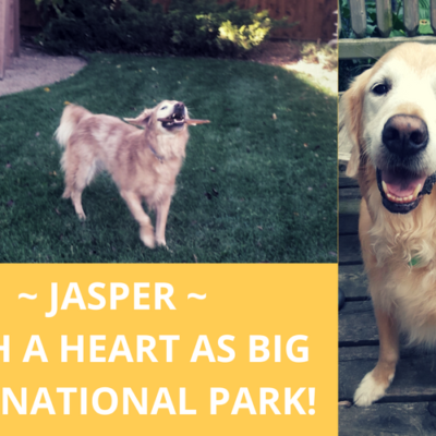 Jasper ~ with a heart as big as a national park