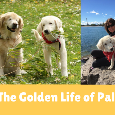 The Golden Life of Pal