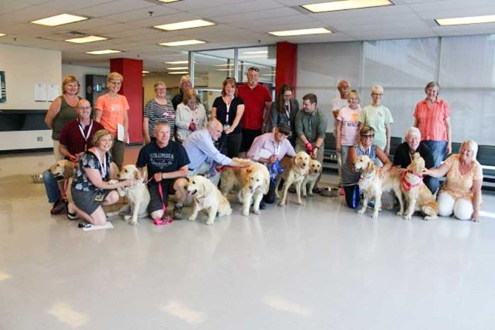 Golden retrievers get second chance in loving Manitoulin homes