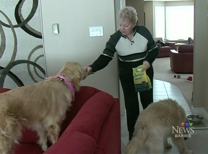 Barrie CTV: A New home for rescued dogs