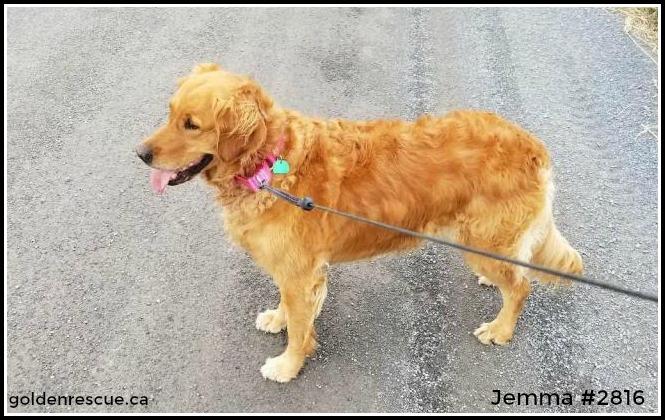 2816 ~ Jemma