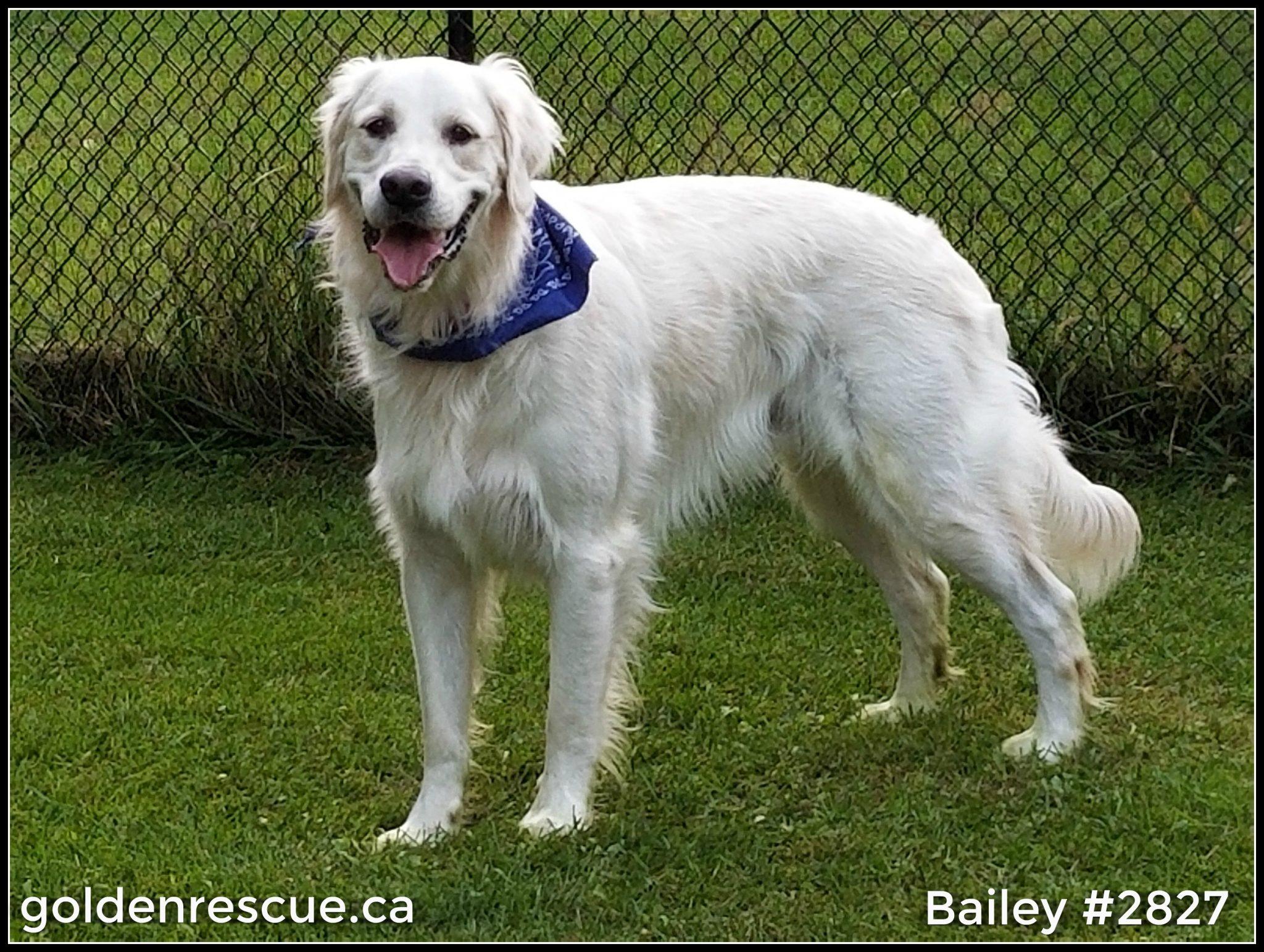 #2827 ~ Bailey