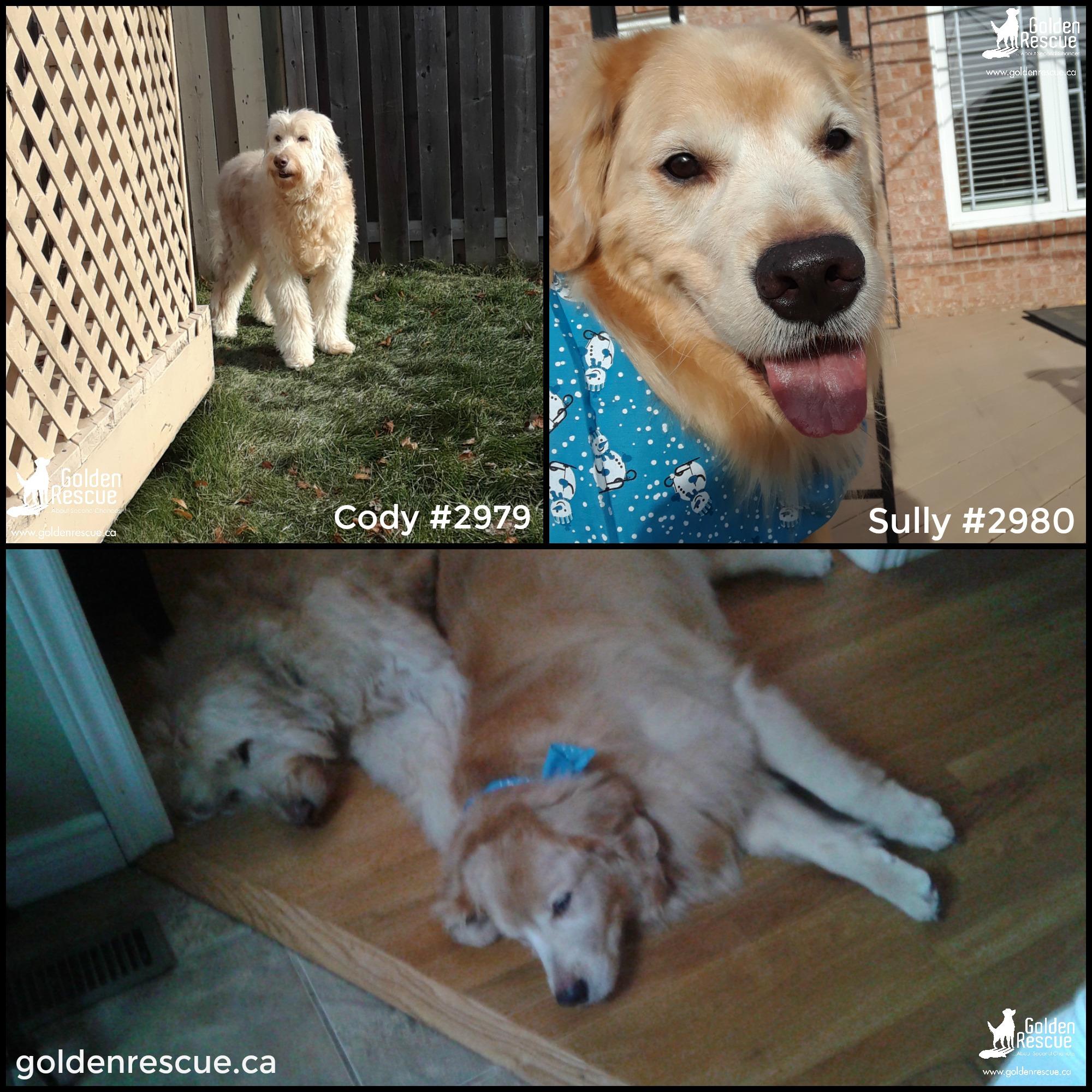 #2979 Cody & #2980 Sully