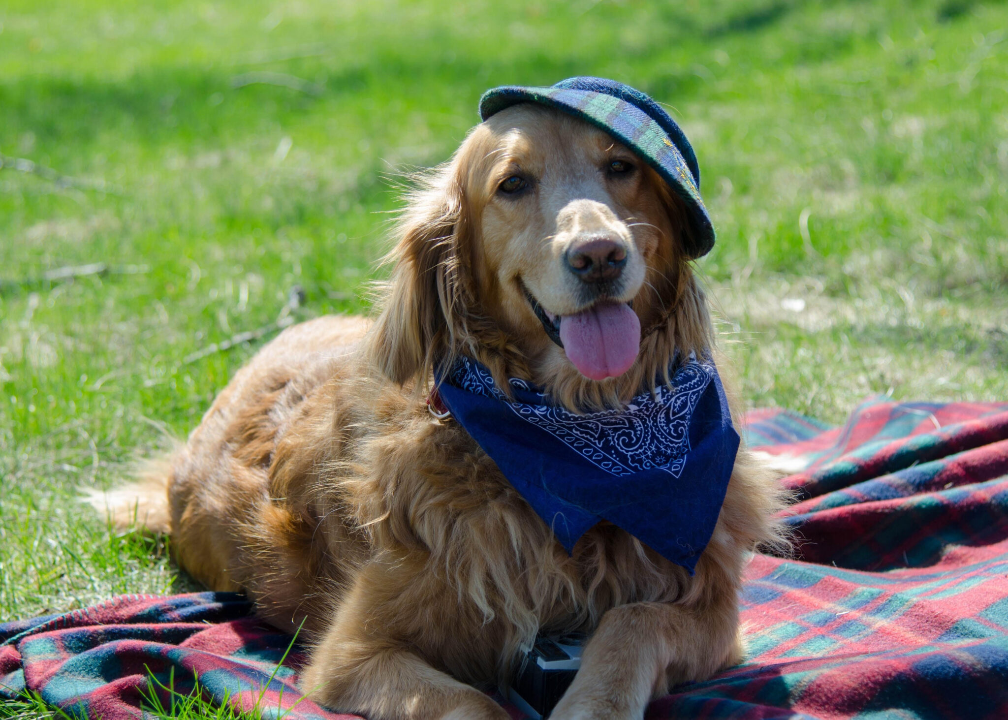 Golden Rescue Annual Picnic – CANCELLED