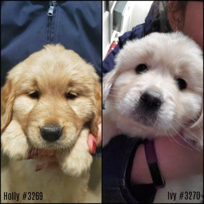 #3269 Holly & #3270 Ivy