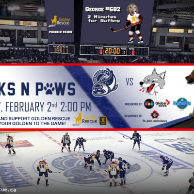 Pucks 'n' Paws Hockey Game
