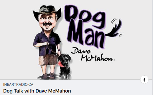 Golden Rescue's Board Chair, Viive Tamm talked with Dog Man Dave McMahon on 610 CKTB Radio.