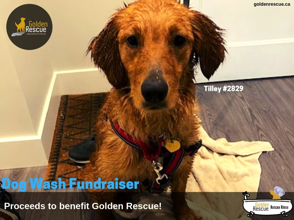 PetValu Rescue Rinse Dog Wash