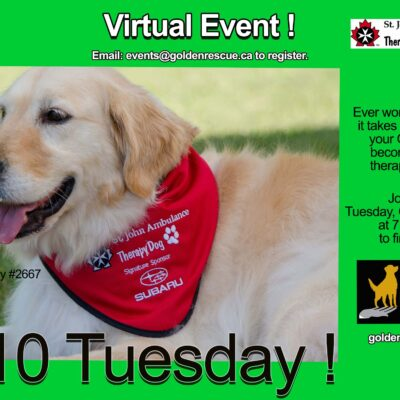 $10 Tuesday Webinar ~ St John's Ambulance Therapy Dog Program